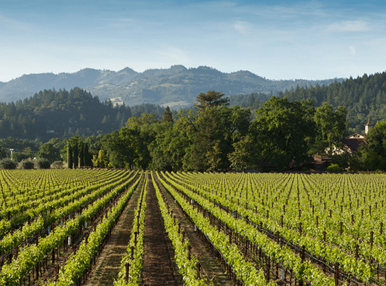 Charles Krug Wine, napa valley wine tours