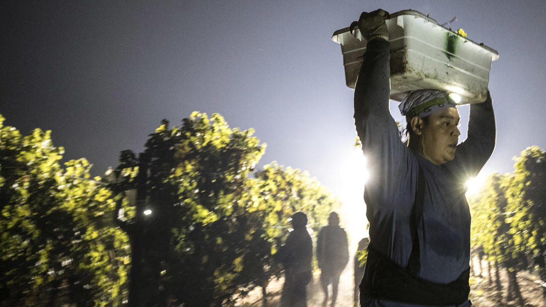 overnight grape harvest la times fire napa